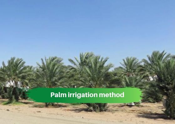 Palm irrigation method
