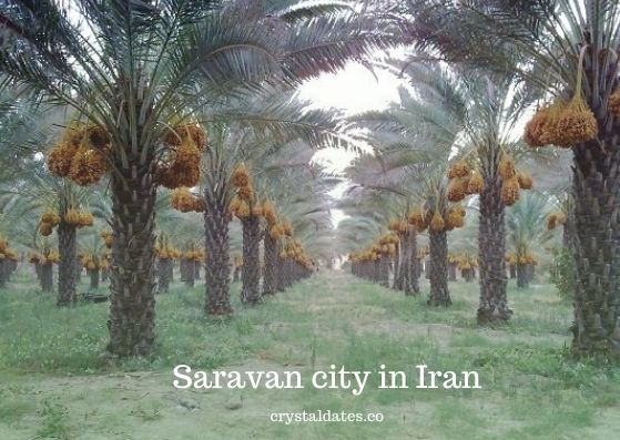 Saravan city in Iran