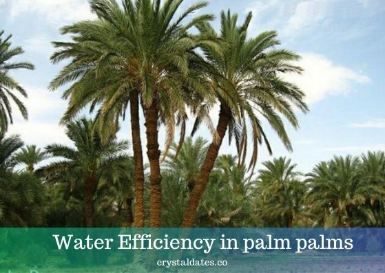Water Efficiency in palm palms
