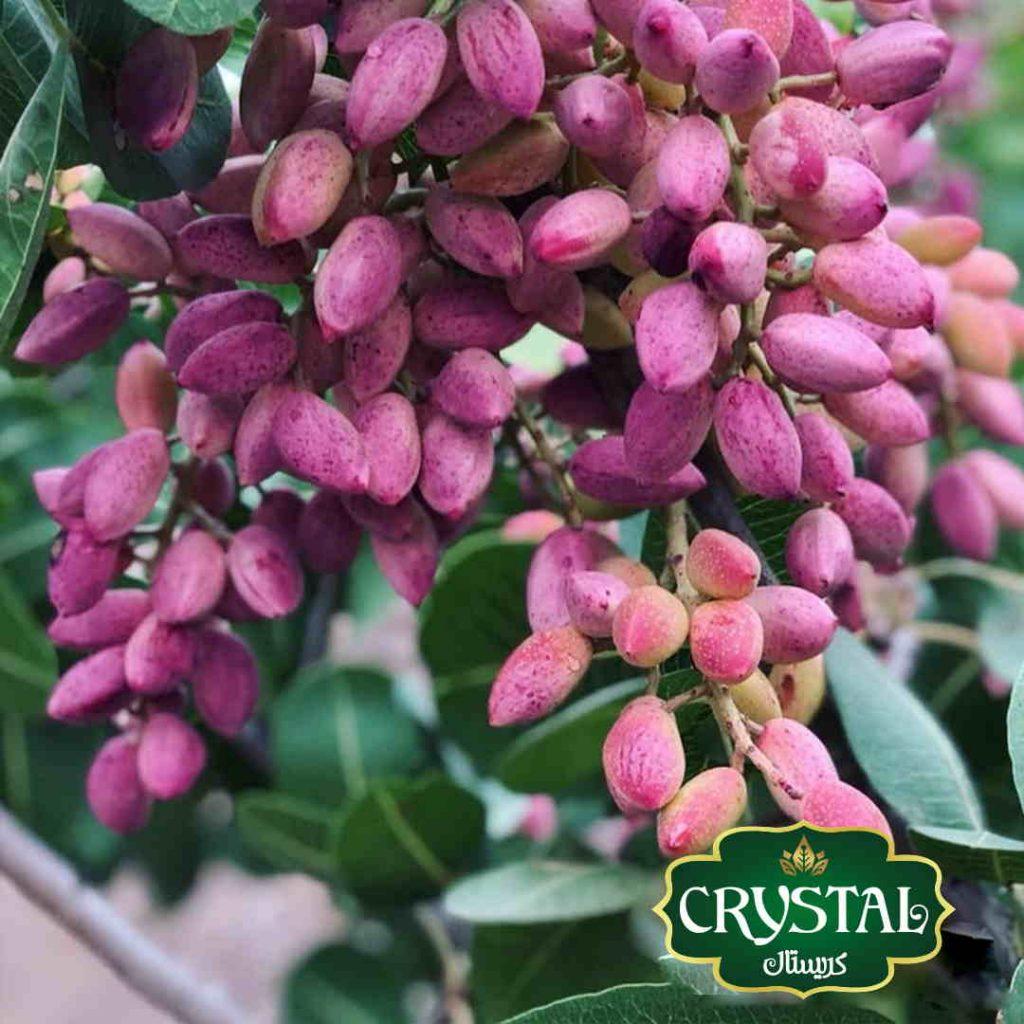 crystal dates pistachio 2