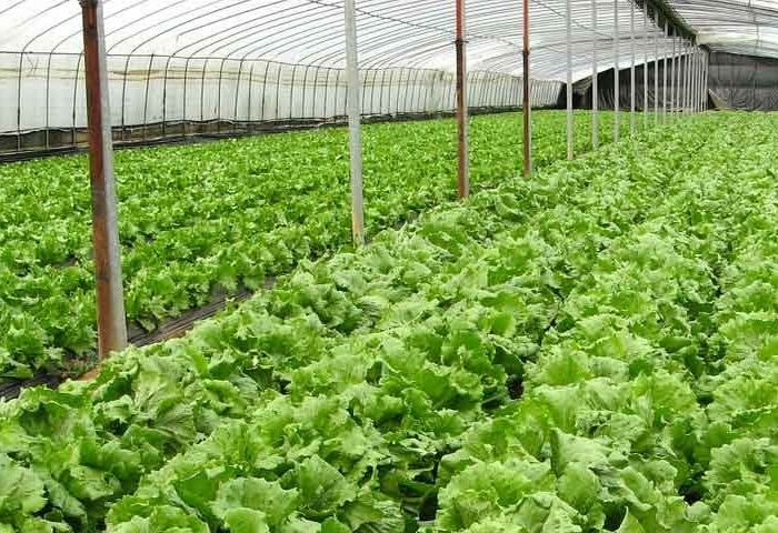 organic farm crystal dates